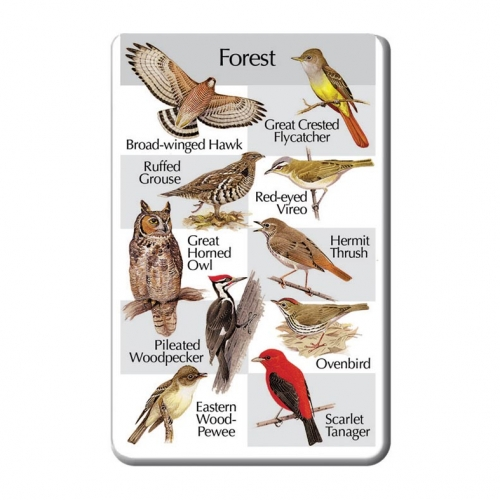 Birds of the Forest SongCard
