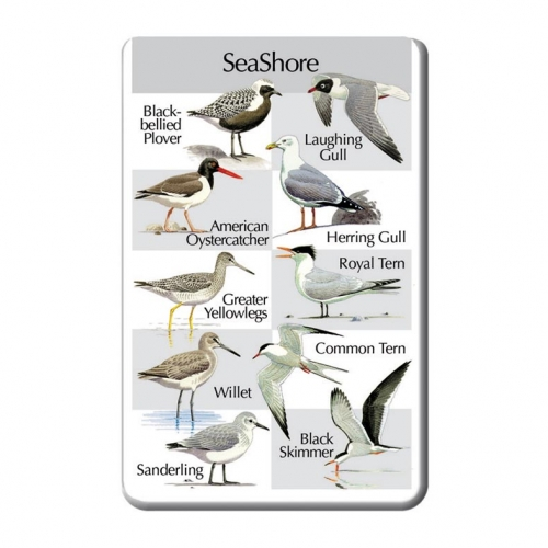 Birds of the Seashore SongCard