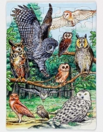 North American Owls Puzzle