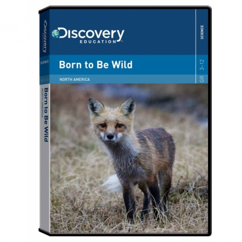 Born to be Wild: North American Animals DVD