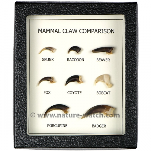 Mammal Claw Comparison Display