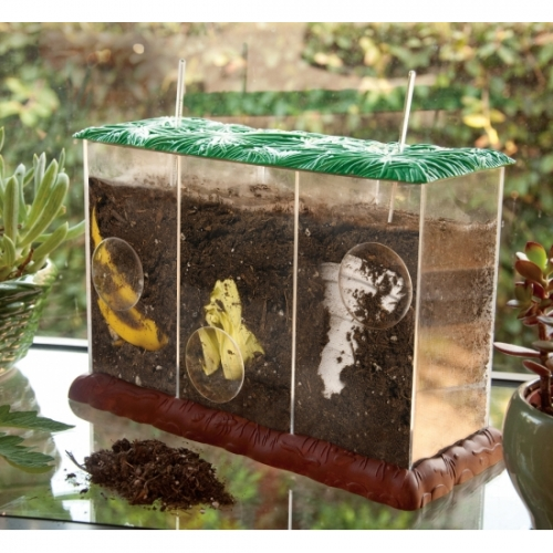 See-Through Composting Container