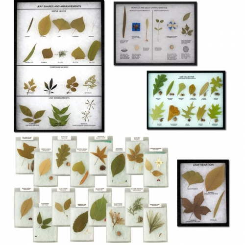 Tree, Leaf, Plant, and Seed Displays