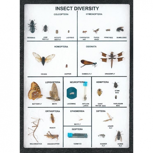 Insect Diversity Display