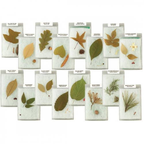 Leaves and Seeds of Trees Displays