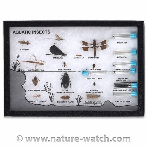 Aquatic Insects Display