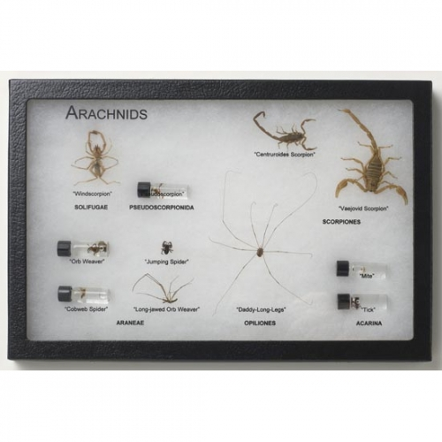 Arachnids Display