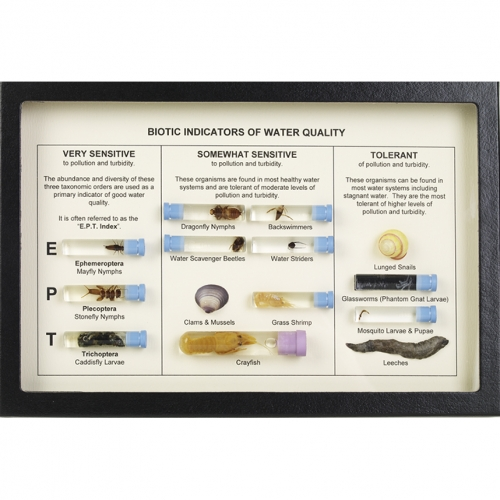 Biotic Indicators of Water Quality Display