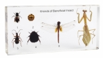 Beneficial Insects Acrylic Block