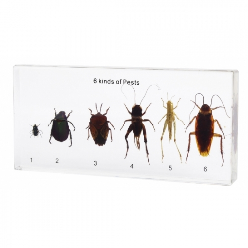 Harmful Insects Acrylic Block