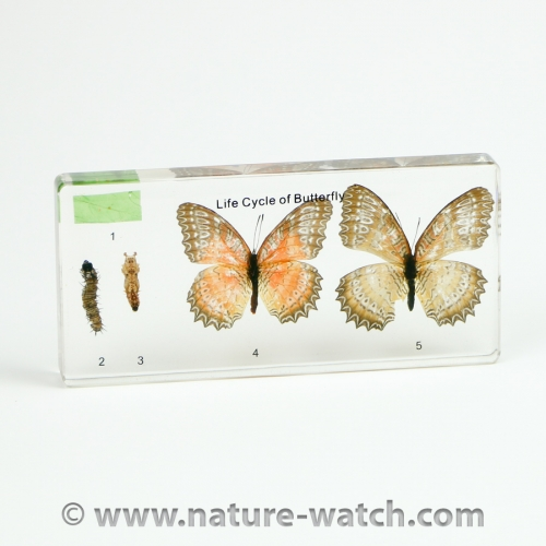 Colorful Butterfly Life Cycle Acrylic Block