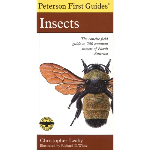 Insects First Guide