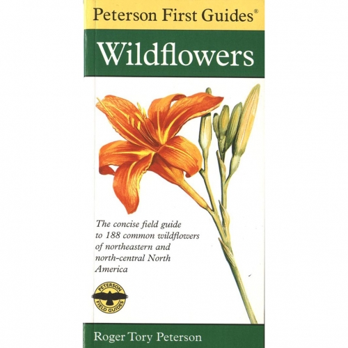 Eastern Wildflowers First Guide