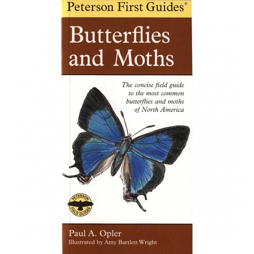 Butterflies and Moths First Guide