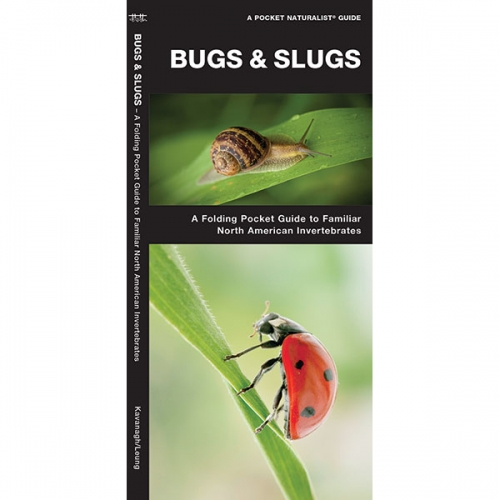 Insectigations Book Insect Book Bug Book