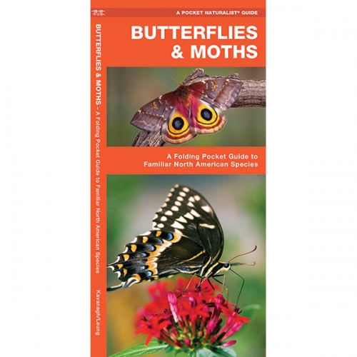 Butterflies & Moths Pocket Naturalist Guide