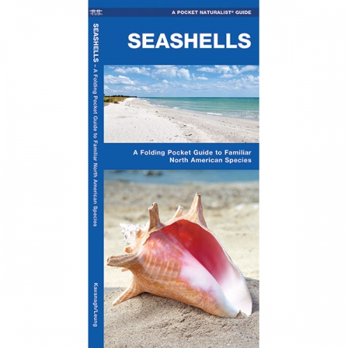 Seashells Pocket Naturalist Guide
