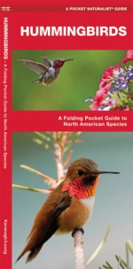 Hummingbirds Pocket Naturalist Guide