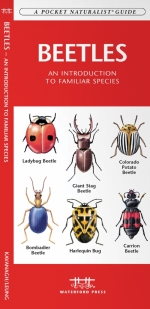 Beetles Pocket Naturalist Guide