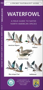 Waterfowl Pocket Naturalist Guide