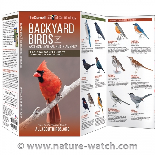 Backyard Birds, Eastern/Central: Cornell Lab Pocket Guide