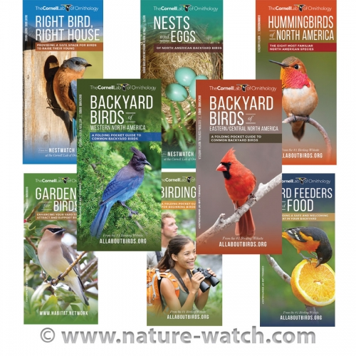 Cornell Lab Birds Pocket Guide Series (8 Guides)
