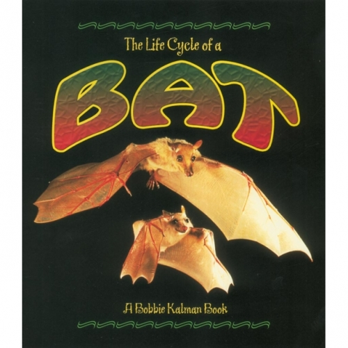 The Life Cycle of a Bat Book