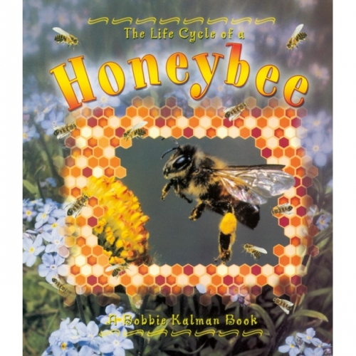 The Life Cycle of a Honeybee Book
