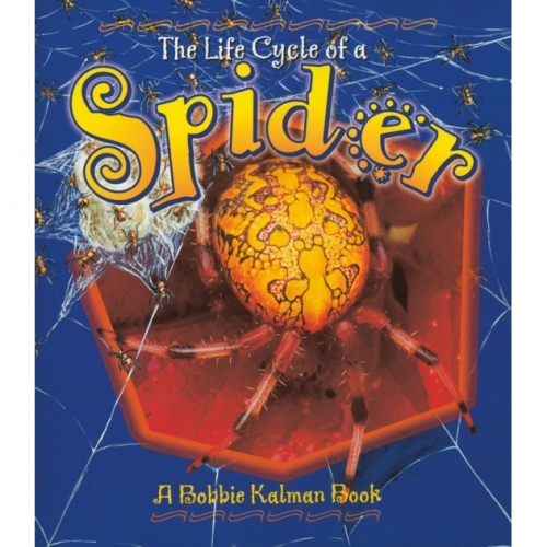 The Life Cycle of a Spider Book