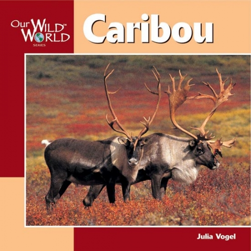 Caribou: Our Wild World
