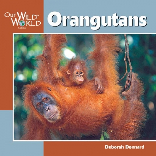 Orangutans: Our Wild World