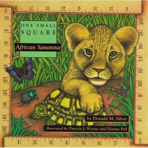 African Savanna: One Small Square