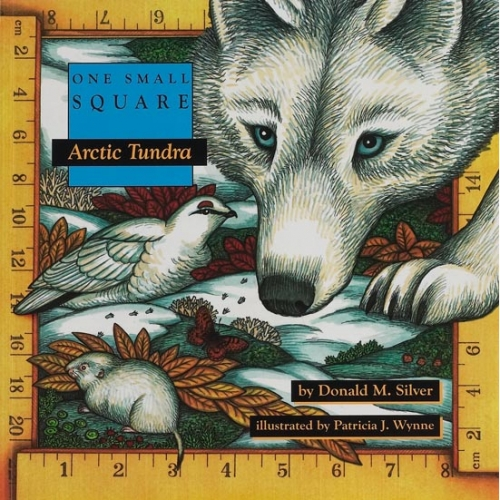 Arctic Tundra: One Small Square