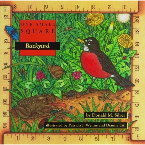 Backyard: One Small Square
