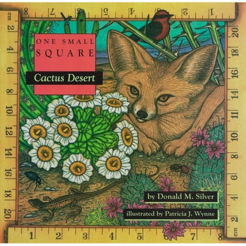 Cactus Desert: One Small Square
