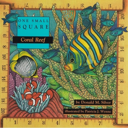 Coral Reef: One Small Square