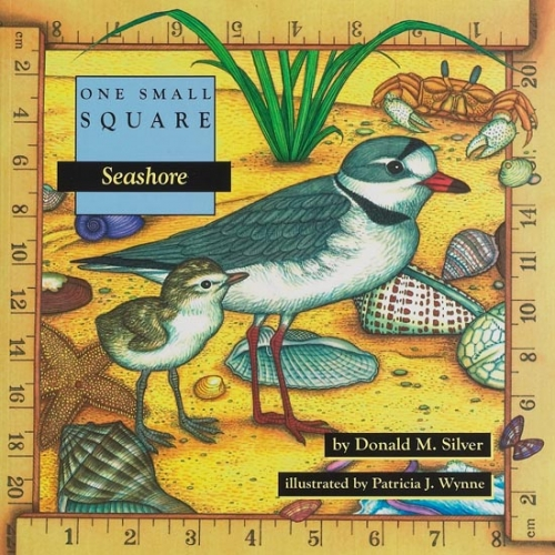 Seashore: One Small Square