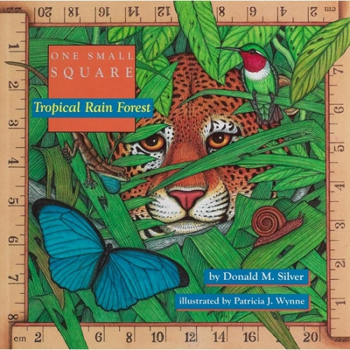 Tropical Rain Forest: One Small Square