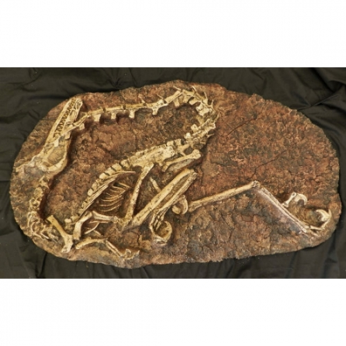 Velociraptor Skeleton Plaque