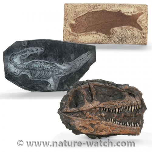 Fossil Plaques