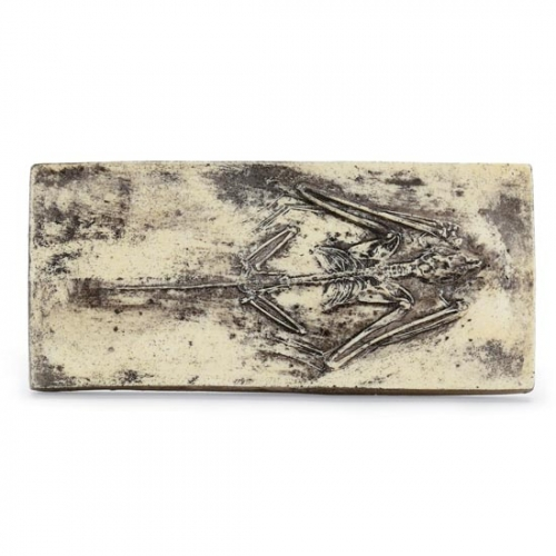 Fossilized Bat Skeleton Plaque
