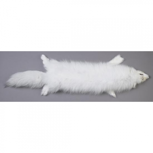 Arctic White Fox Skin