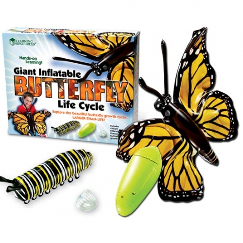 Giant Inflatable Butterfly Life Cycle