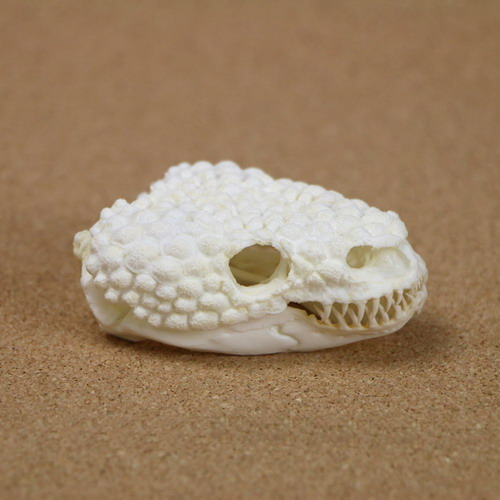 Gila Monster Skull Replica