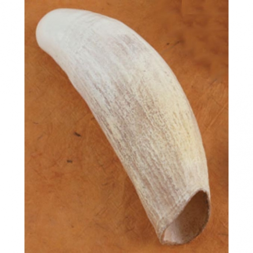 Sperm Whale Tooth Replica
