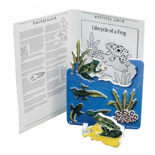 Frog Life Cycle Foam Model Plus Activity Card
