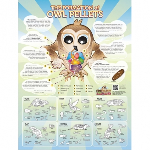 The Formation of Owl Pellets Poster