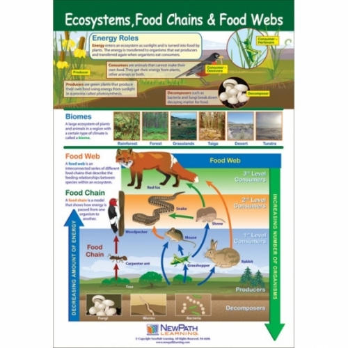Ecosystems, Food Chains and Food Webs Poster
