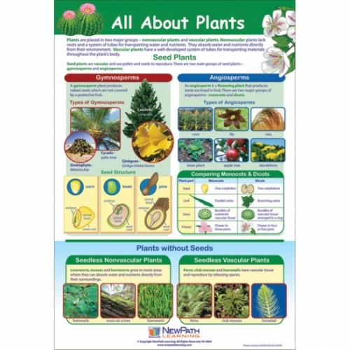All About Plants Poster