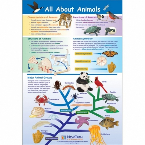 All About Animals Poster